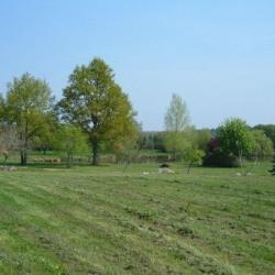 Vente Terrain Souvigné 53000 m²