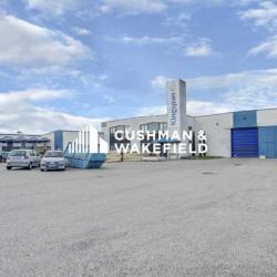 Location Local d'activités Chaponnay (69970)