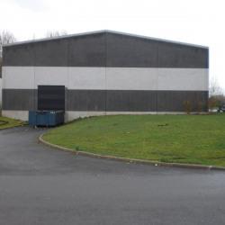 Location Local d'activités Templeuve 1150 m²