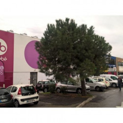 Location Local commercial Nice 508 m²