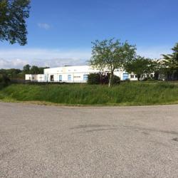 Location Entrepôt Grisolles 6526 m²