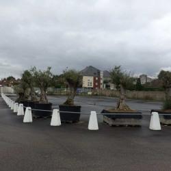 Location Terrain Saint-Quentin 1500 m²