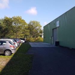 Location Local d'activités Mios 280 m²