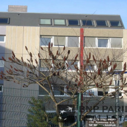 Location Bureau Strasbourg 198 m²