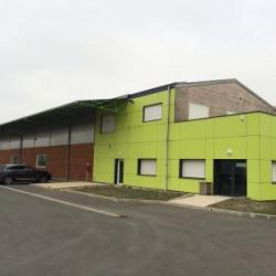 Location Local d'activités / Entrepôt Baule