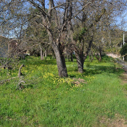 Vente Terrain Santa-Lucia-di-Moriani 985 m²