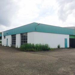 Vente Local d'activités Entzheim 200 m²