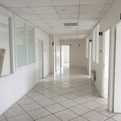 Location Bureau Albi 160 m²
