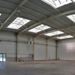 Location Local d'activités Hallennes-lez-Haubourdin 540 m²