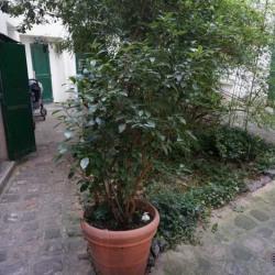 Location Bureau Neuilly-sur-Seine 85 m²