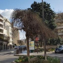 Location Bureau Vincennes 79 m²