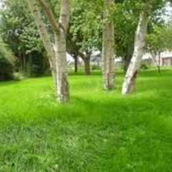 Terrain  de 892 m²  Chennevières-sur-Marne  (94430)