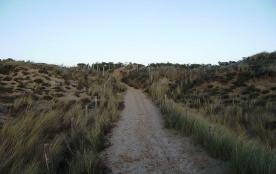 Sentier dans les dunes