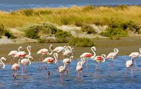 Parc naturel de Camargue
