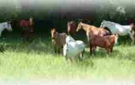 Equitation à Bégoux