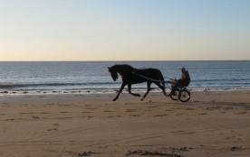 Entrainement sur la plage d'un cheval