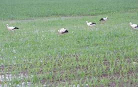 Cigognes d'Alsace village voisin