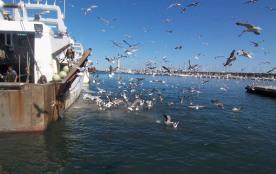 arrivée de bateaux de pêche