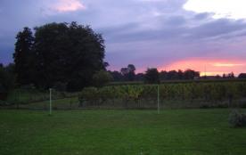 vue sur les vignes le soir à la tombée de la nuit
