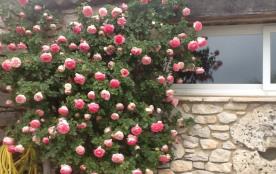 rosier à gauche fenêtre piece à vivre