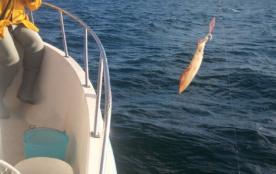 pêche à l'encornet