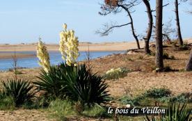 le bois du Veillon