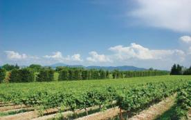 Location Vacances - Sainte Cécile les Vignes - FPV338