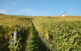vignes se situant derrière la maison