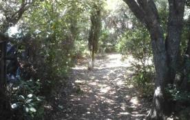 terrain boisé , petit endroit naturel....
