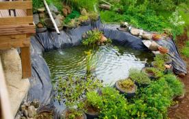 bassin de poissons Koi