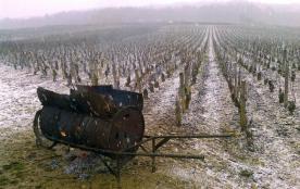 Brouette vigne hiver
