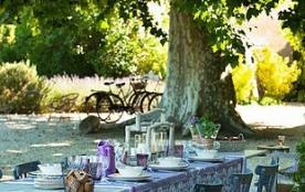 Déjeuner sous les platanes centenaires