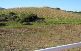 Les vignes vus de la terrasse