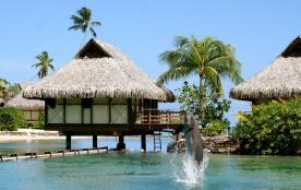 """Vivez votre séjour de rêve sur une île paradisiaque.GOYAVE               """"Goûtez notre nature"""" en Guadeloupe."""