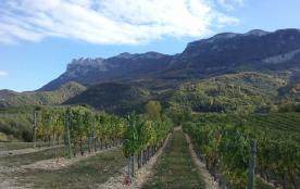 les vignes et la Roche