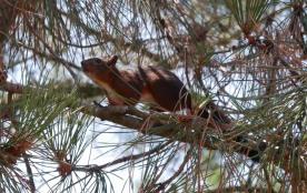 Un écureuil bien curieux dans le sous-bois