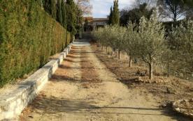 L'allée bordée d'oliviers menant à la maison en location