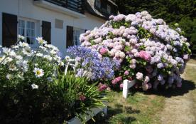 Les horthensias du jardin