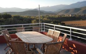 oliveraie et vignes vus de la terrasse RDC