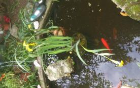 Jardinet avant bac à poissons