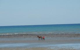 plage a marée basse , 80 mètres de la location