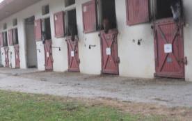chevaux du centre hippique (1200m. de l'appt.)