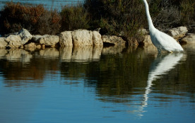 au bord de l'étang, à 100 m de la maison...