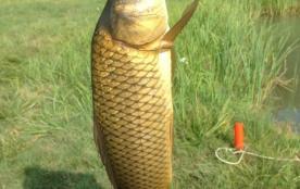 la pêche au Moulin Haut