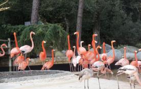 Au zoo de La Palmyre