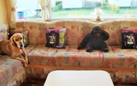 Salon <avec mon chien>