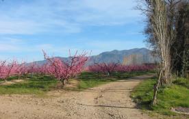 Ballades dans les vignes au printemps