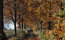 l automne et ces promenades