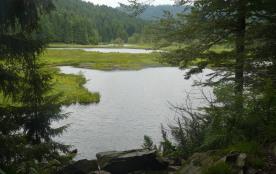 Curieux lac de montagne envahi par la végétation. Paradis des pêcheurs.