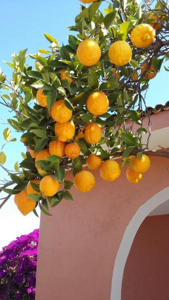 Location vacances Marrakech -  Maison - 7 personnes -  - Photo N° 1